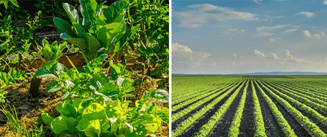 International Journal of Agriculture and Plant Science